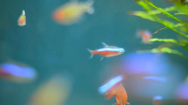 small tiny fish