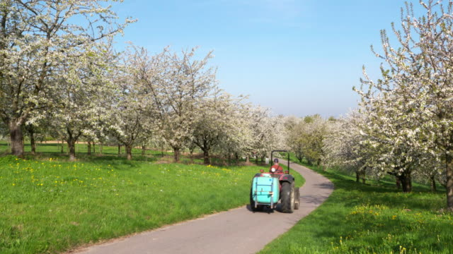 small tractor driving on rural road between cherry trees in blossom, springtime. - baden württemberg stock videos & royalty-free footage