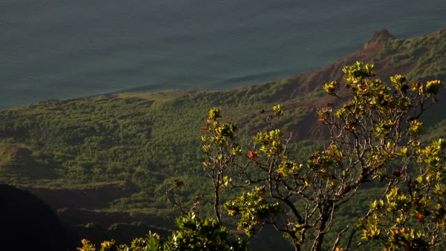 small tree on cliff edge on kauai island - butte rocky outcrop stock videos & royalty-free footage