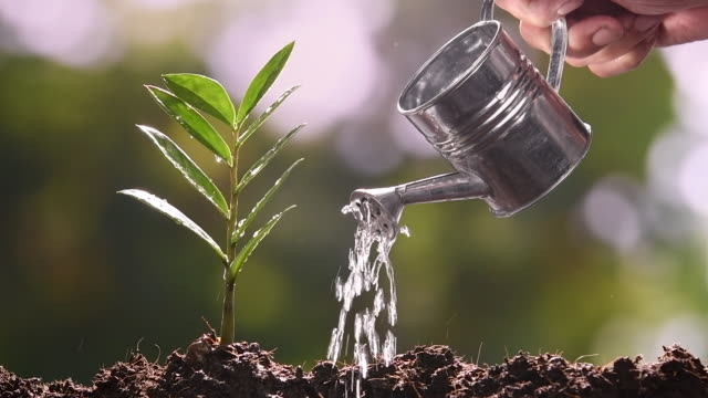 small tree watered from a watering can - watering can stock videos & royalty-free footage