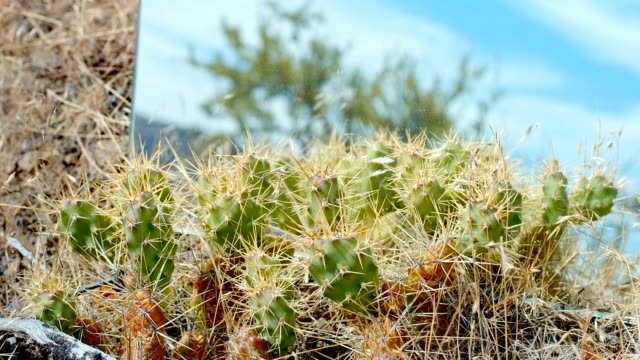 Small vibrant colorful cactus cacti blue sky mirror desert time lapse