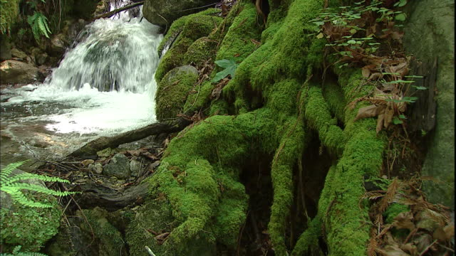 A small waterfall flows into a stream near ferns and moss covered rocks.