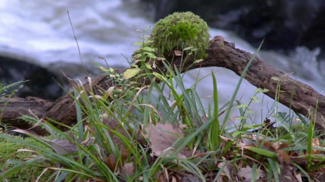 vidéos et rushes de petite cascade à rural dumfries and galloway en écosse sud ouest - mousse végétale