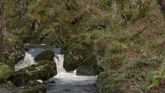small waterfall in rural dumfries and galloway south west scotland - johnfscott stock videos & royalty-free footage