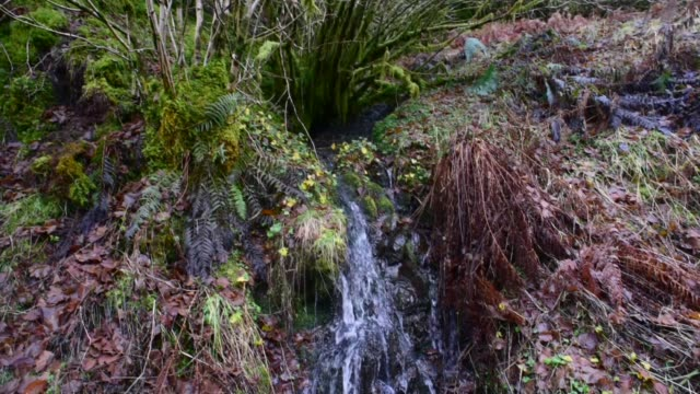 small waterfall in the fairy knowe. - david johnson stock videos & royalty-free footage