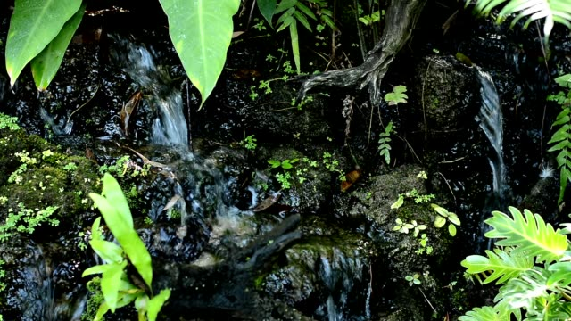 small waterfall in the park - nightdress stock videos & royalty-free footage