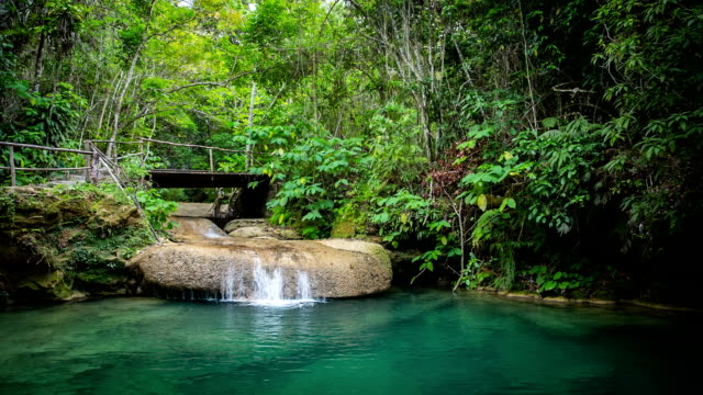 small waterfall in tropical rainforest - rainforest stock videos & royalty-free footage