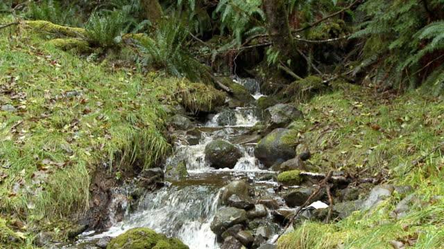 vídeos de stock e filmes b-roll de ws zo small waterfall rocks / sandspit, british columbia, canada - banco de areia