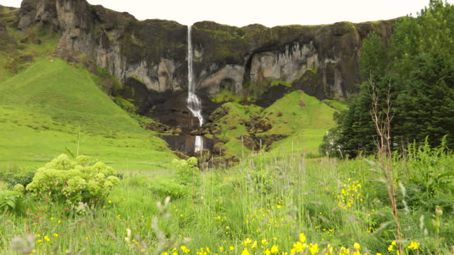 vidéos et rushes de small waterfall with wildflowers, iceland - renoncule d'asie