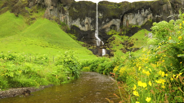 vídeos de stock, filmes e b-roll de small waterfall with wildflowers, iceland - cachoeira de seljalandsfoss