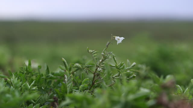 small white flower - wiese stock videos & royalty-free footage