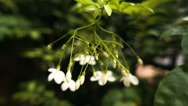 small white flower - realisticfilm stock videos and b-roll footage