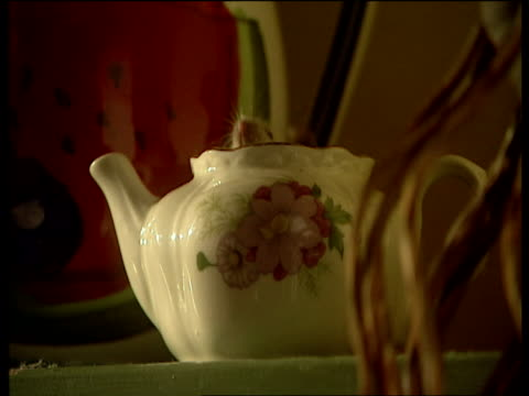 small white mouse pops head out of tea pot - tea pot stock videos and b-roll footage