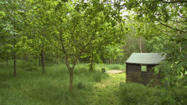 small wooden hut in woods - shack stock videos & royalty-free footage