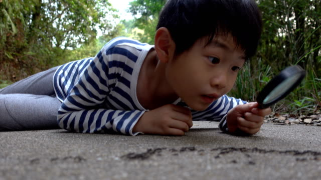 smart boy watching ants with magnifying glass - ant stock videos & royalty-free footage