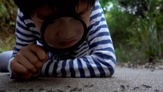 smart junge beobachten ameisen mit lupe - insekt stock-videos und b-roll-filmmaterial