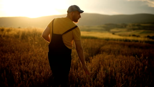 vidéos et rushes de une agriculture intelligente utilisant les technologies modernes en agriculture - derrière