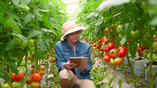 smart farming med digital surfplatta samlar stat - revolution bildbanksvideor och videomaterial från bakom kulisserna