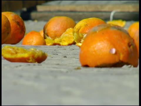 cu selective focus smashed oranges lying on pavement / ivrea, torino, italy / audio - messy video stock e b–roll
