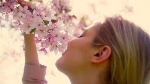 vídeos y material grabado en eventos de stock de olor a flores de cerezo - escena de tranquilidad