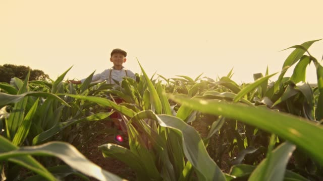 smiling carefree boy running in sunny,rural corn field,slow motion - suspenders stock videos and b-roll footage