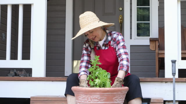vídeos de stock e filmes b-roll de smiling caucasian woman tamping soil around freshly potted lettuces - alpendre