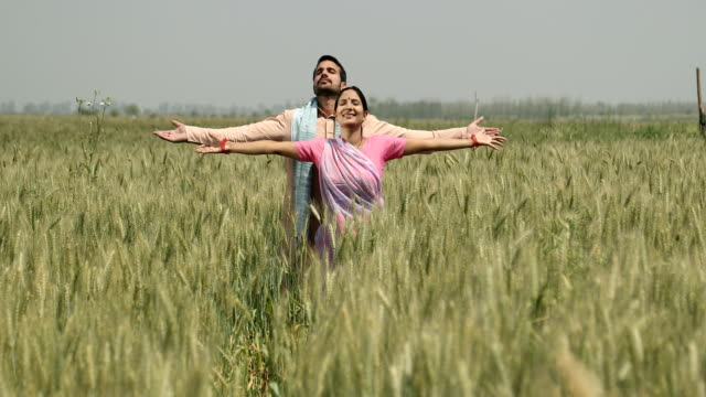 stockvideo's en b-roll-footage met ws cs smiling couple with arms outstretched standing in wheat field / samalkha, haryana, india - driekwartlengte