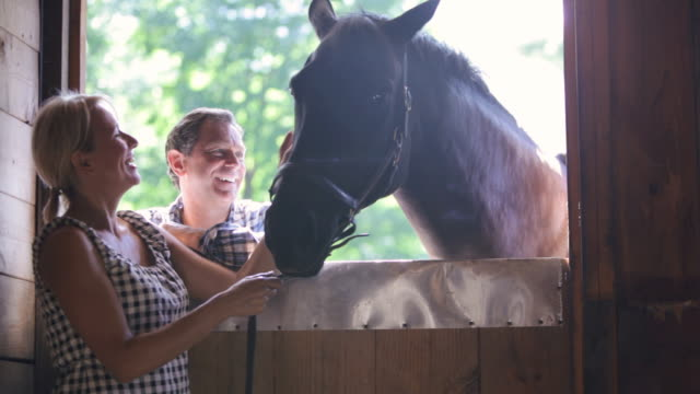 stockvideo's en b-roll-footage met  ds smiling farm couple standing in barn doorway talking and petting horse / stowe, vermont, united states - werkdier