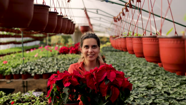 smiling female botanist carrying poinsettia plant in greenhouse - botanist stock videos & royalty-free footage