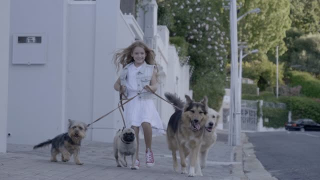 smiling girl being pulled by her cute dogs on sidewalk - haustierbesitzer stock-videos und b-roll-filmmaterial