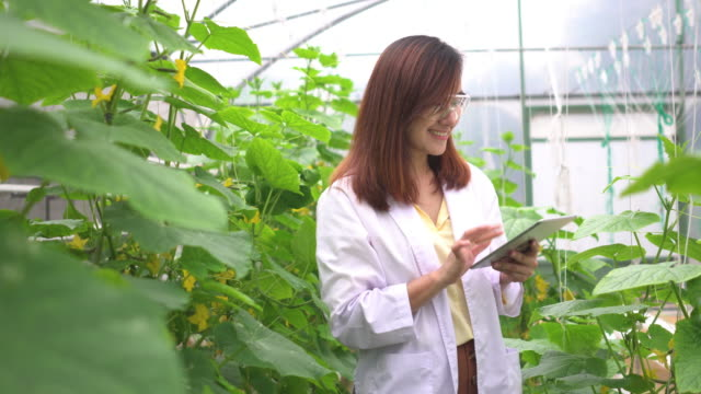 smiling of scientist after inspecting melon tree and collecting data on a digital tablet - greenhouse stock videos & royalty-free footage