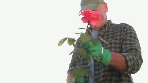 vídeos y material grabado en eventos de stock de sonriente jardinero senior - tartán