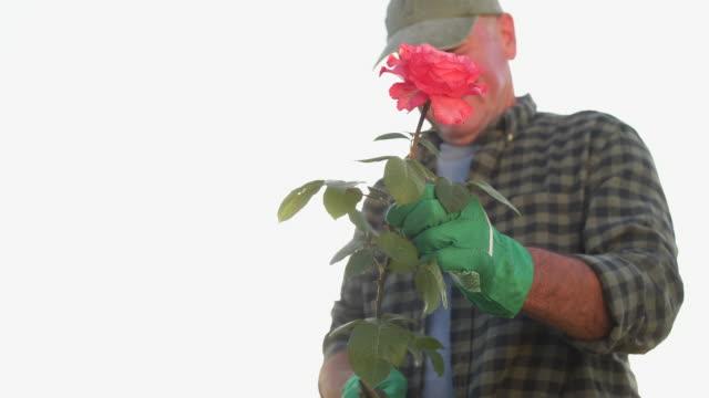smiling senior gardener - tartan stock videos & royalty-free footage
