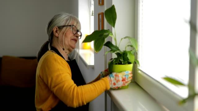 vídeos de stock e filmes b-roll de smiling woman controlling plants close to window - colocar planta em vaso