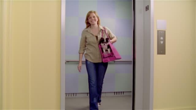 vídeos de stock, filmes e b-roll de ms, smiling woman leaving elevator, carrying long coat chihuahua in pink shoulder bag - bichos mimados