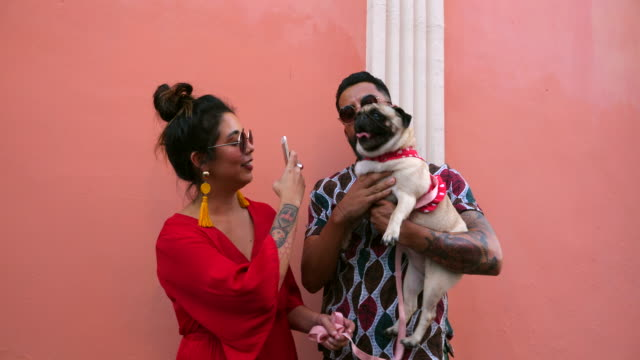 ms smiling woman taking photo with smart phone of boyfriend holding dog - fashionable stock videos & royalty-free footage