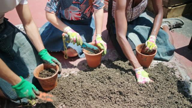 lächelnde junge freunde topfpflanzen in sonnigen dachgarten - unabhängigkeit stock-videos und b-roll-filmmaterial