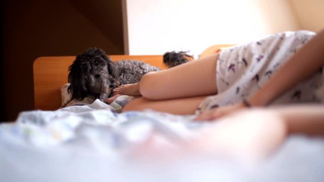 vídeos de stock, filmes e b-roll de mulher jovem sorridente, a brincar com o cão na cama - manhã