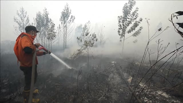vídeos de stock, filmes e b-roll de smog from forest fires in indonesia shrouds sumatra island after this week prompting the cancellation of flights and warnings for people to stay... - estilo de vida insalubre