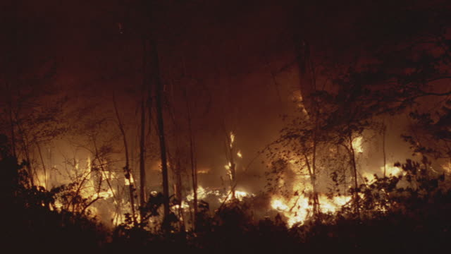 Smoke and flames billow from a burning forest fire.