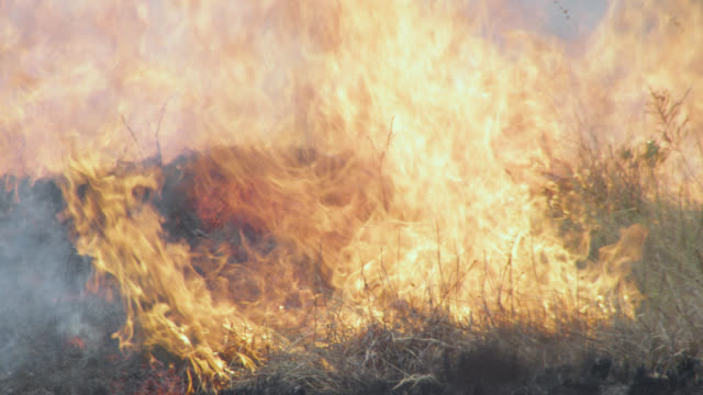 smoke and flames rise from burning cerrado grassland. - cerrado stock videos & royalty-free footage