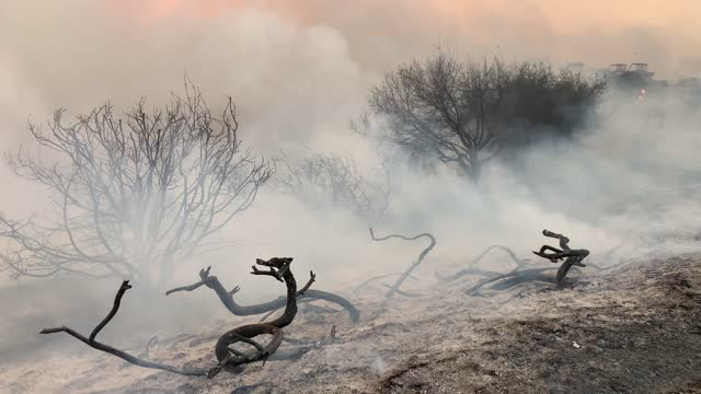 smoke and small flames rising from charred trees during the silverado fire in irvine, ca, on monday, october 26, 2020. - irvine california stock videos & royalty-free footage