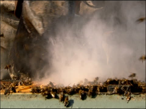 vidéos et rushes de smoke being puffed at bees in hive, andalucia, spain - matière chimique
