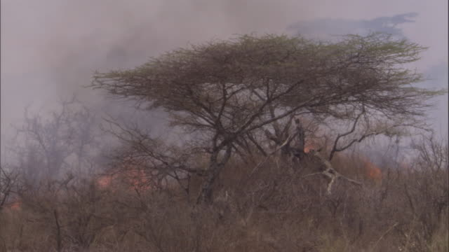 """vidéos et rushes de smoke billows from flames burning on the serengeti. available in hd. - """"bbc natural history"""""""