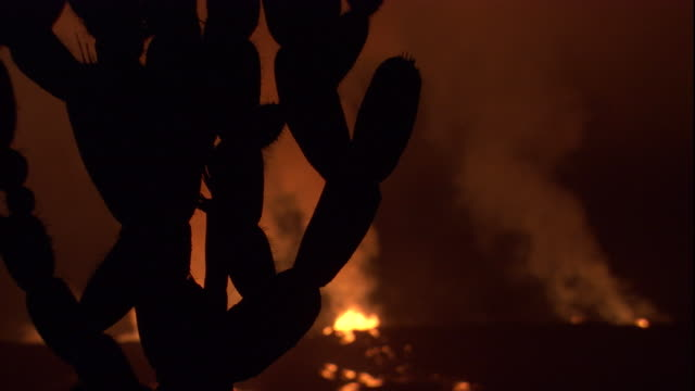 smoke billows from hot lava in the distance past a silhouetted cactus. available in hd. - cactus silhouette stock videos & royalty-free footage