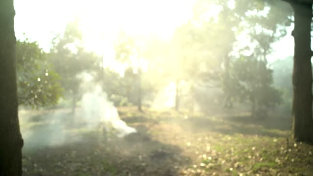 smoke bonfire in the forest grass on the field. - land stock videos & royalty-free footage