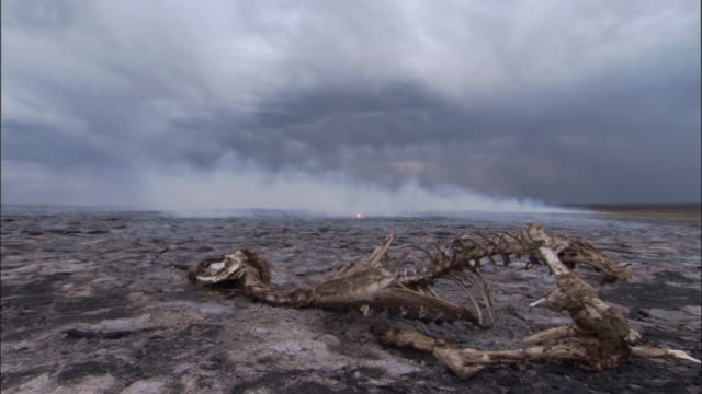 Smoke drifts from scorched ground around skeleton on steppe, Mongolian steppe
