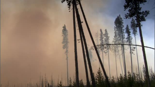 vídeos y material grabado en eventos de stock de smoke from burning forest fire wafts through trees, yellowstone, usa - quemar