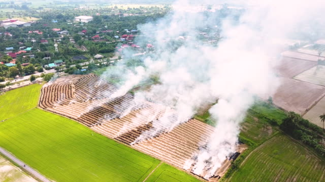 smoke from burning rice paddy field, viewed from flying drone - luzon stock videos & royalty-free footage