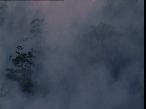 Smoke from bush fire drifts over forest near Sydney, Australia